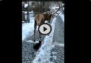 [VIDEO] L'incontro speciale tra il cervo ed il gatto a Villetta Barrea (AQ) nel PNALM – Meteo Abruzzo