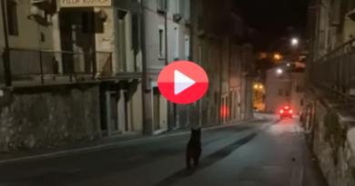 [VIDEO] Orso marsicano avvistato nel pieno centro di Celano (AQ) – Meteo Abruzzo